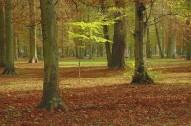 Parc de la Colombière, Dijon
