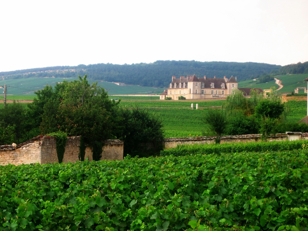 Côte d'Or, Burgundy: golden vineyards, wine tasting & relaxation (2/6)