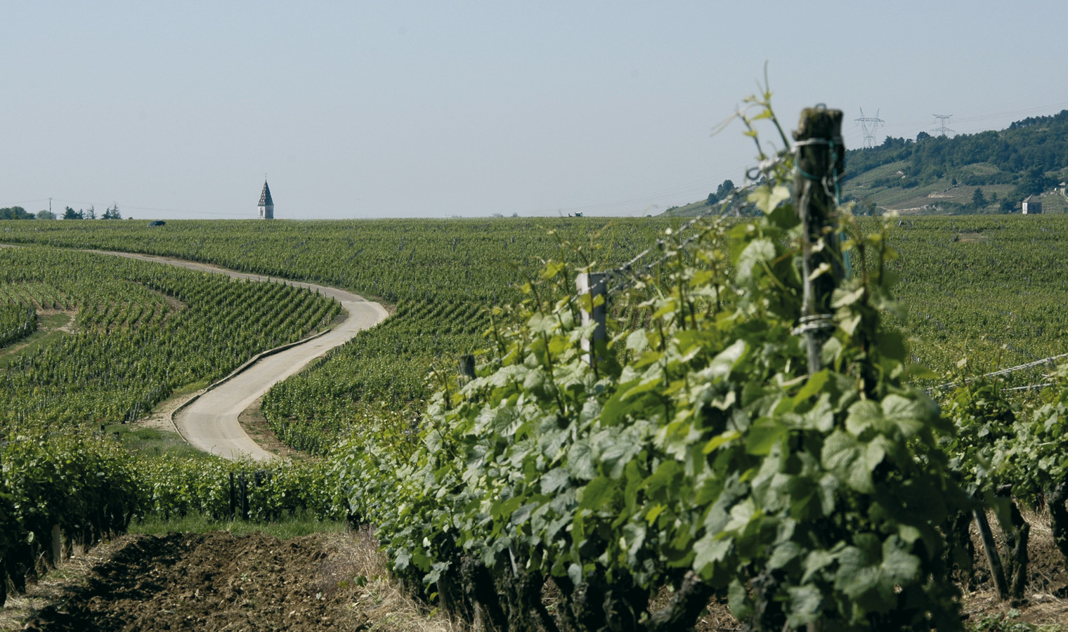 C te d or burgundy golden vineyards wine tasting relaxation le splendide voyage - The splendid transformation of a vineyard in burgundy ...