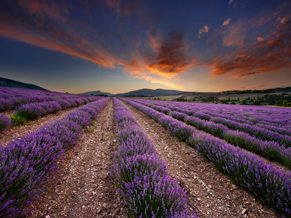 Roman landmarks, violet blue tufts, spices and other subtle nuances:  Provence  (2/6)